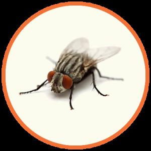 cupinsect-pragas-urbanas-mosca
